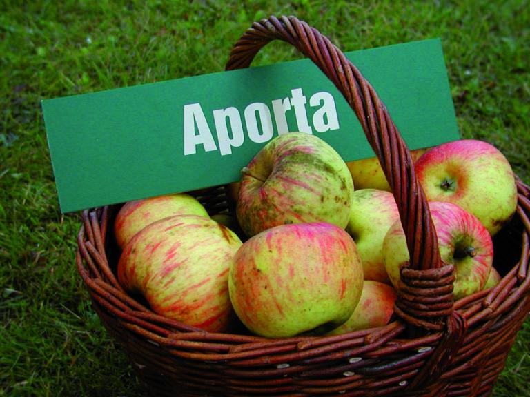 Wiklinowy kosz z lekko rożowymi jabłkami. Na jabłkach leży plakietka z napisem Aporta.
