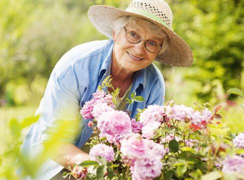 Starsza kobieta w słomkowym kapeluszu pochyla się nad różami.