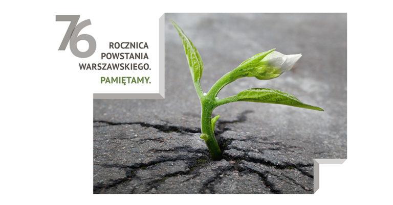 W spękanym asfalcie wysrasta młoda zielona roślinka. Po lewej stronie napis: 76 rocznica Powstania Warszawskiego. Pamiętamy