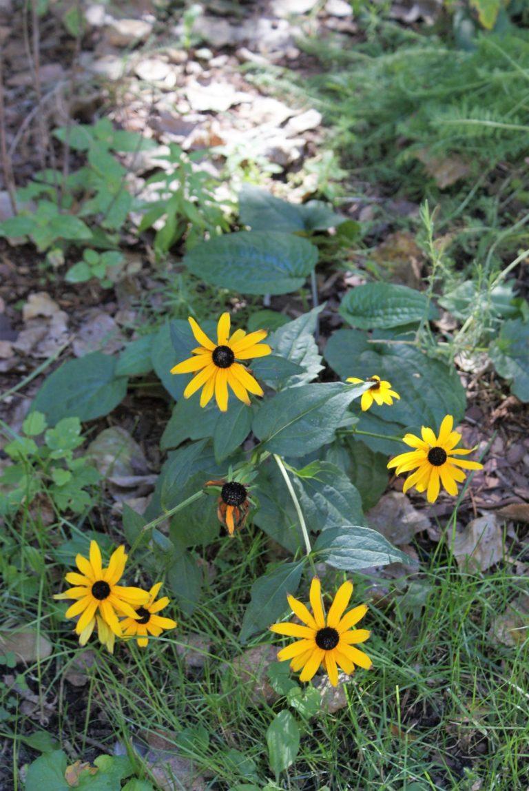 Żółte kwiaty.