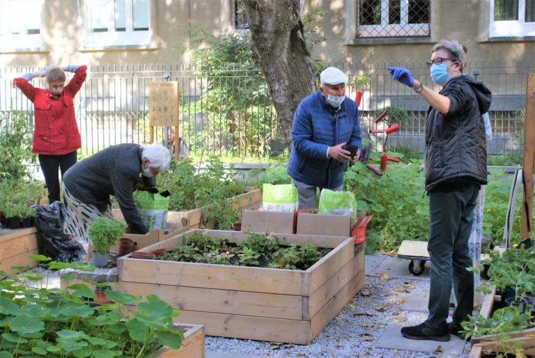 Dwoje seniorów pracujących w ogrodzie.