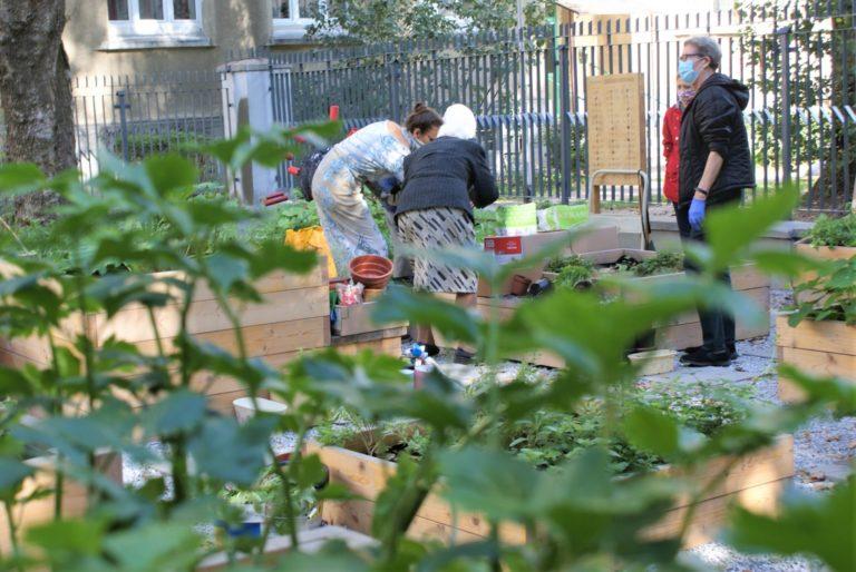 Osoby pracujące w ogrodzie.