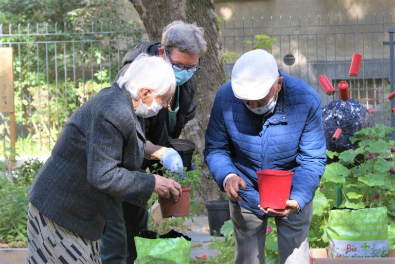 Trzech seniorów przesadza zioła.