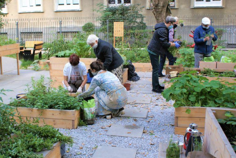 Kilka osób pracuje w ogrodzie przy rozsadzaniu sadzonek ziół.