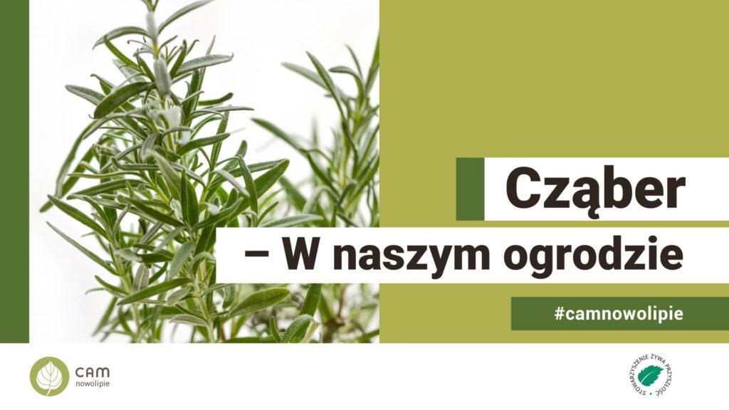 grafika zdjęcie rośliny i napis Cząber - w naszym ogrodzize