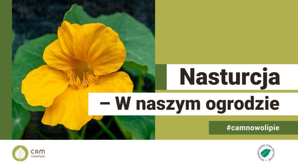 grafika zawierające zdjęcie kwiatu nasturcji i nasis: Nasturcja - w naszym ogrodzie