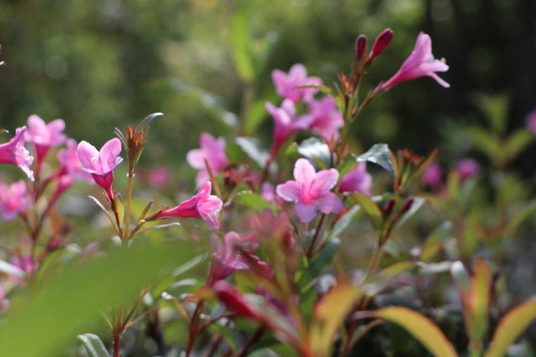 Różowe kwiaty.