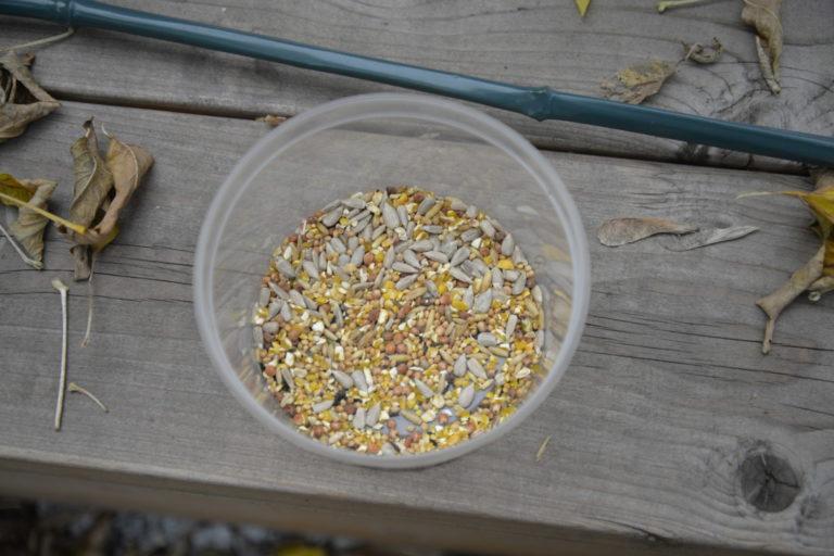 Nasiona dla ptaków w kubeczku.
