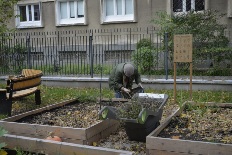 Osoba sprząta skrzynię z ziołami.