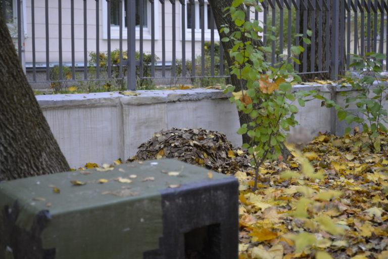 Kuka liści pod parkanem dla jerzy.