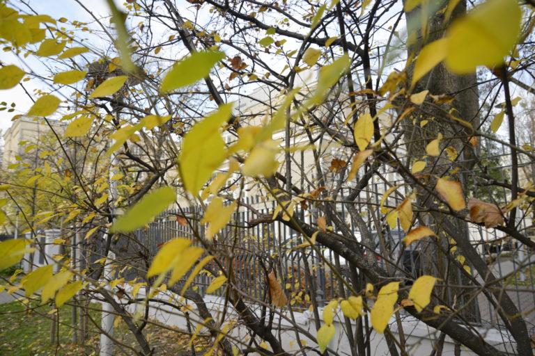 Jesienne liście