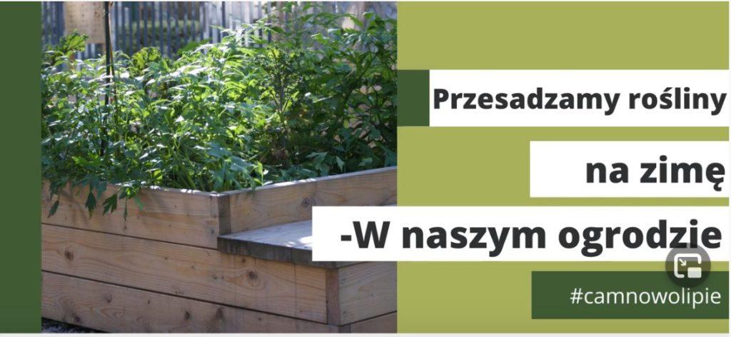 Grafika z napisem: Przesadzanie roślin na zimę - w naszym ogrodzie