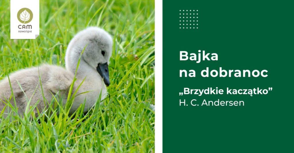 Małe kaczątko na trawie.