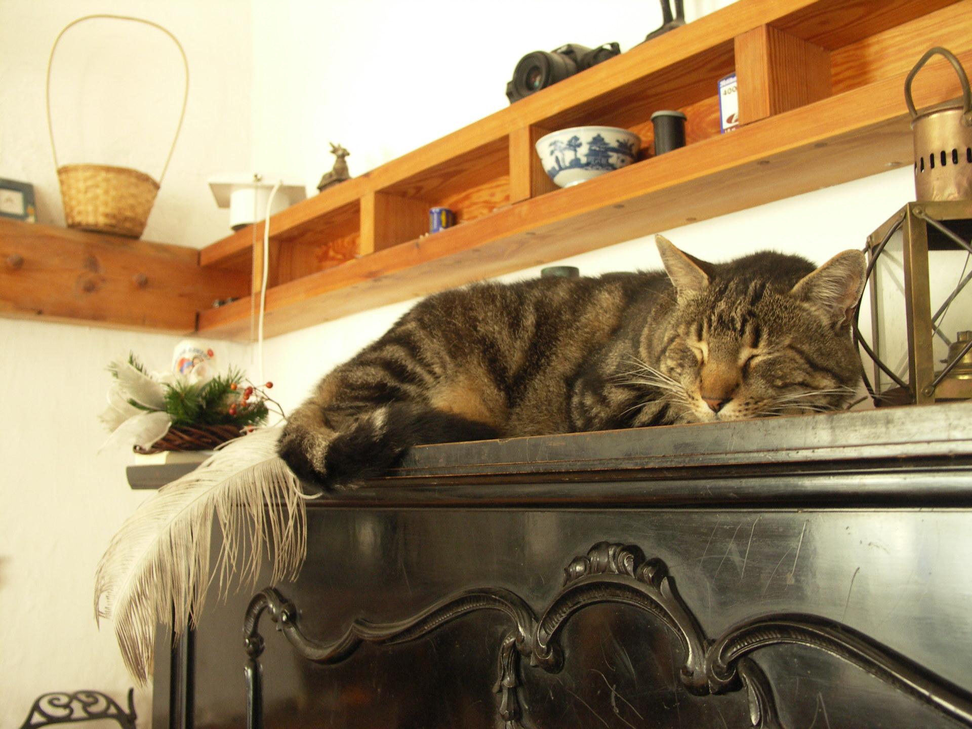 Kot leżący na szafce w domu.