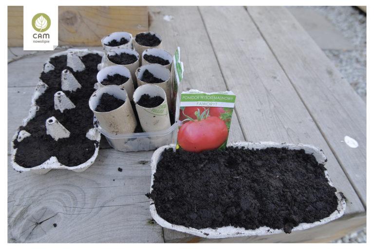 Warzywa posiane w wytłoczkach po jajkach oraz rolkach po papierze toaletowym Ustawione na ławce..